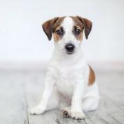 Haustier & Wohnungsmiete - Hund, Katze